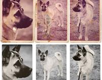 Photo Restoration - Dog named Sem