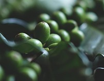 Coffee Plant Photography for Starbucks China