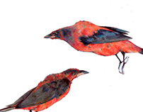 Scarlet tanagers