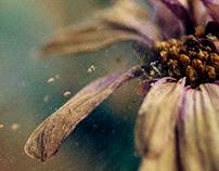 Decadent Flowers