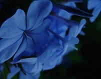 Naturaleza (Flores)
