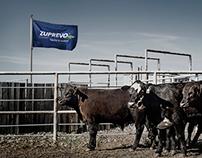 Merck – Zuprevo Print Ads