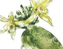 flowers   for «Vokrug Sveta» magazine
