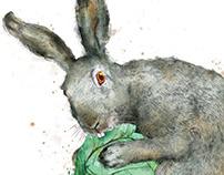 Rabbit   for «Vokrug Sveta» magazine