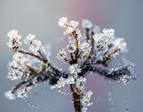 Macro - Part II - A Cold Winter Morning