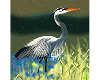 Blue Heron, Illustrator, Nature.