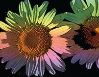 Flowers in Adobe Photoshop