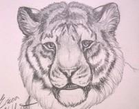 Sketchbook - Pencil