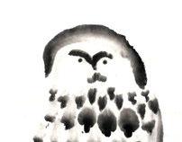 Owl & Сuckoo 5