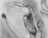 Hummingbird and spider