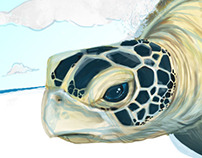Turtle Land