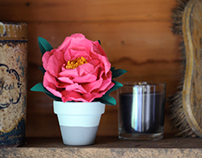 Not on the High Street Peonies in Pots Collection