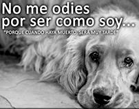 Campaña contra el Maltrato a los Perros