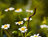 Flowers 2013
