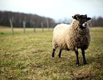 Farmland | Photojournalism