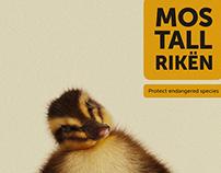 Little RIKA (goose)