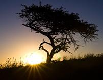 Thanda surroundings