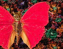 Caterflies