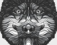 Husky Siberiano.