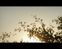 """""""Sunset 7D"""" (2013)"""