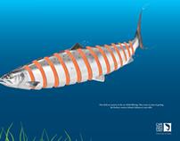 Cape Town Fish Market - DPS (2012)