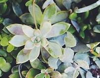 Botanical II