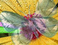 Butterfly Droplet