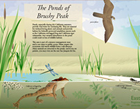 The Ponds of Brushy Peak