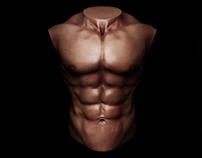 3D Muscular Body