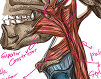 The Medical Illustration