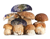 Can Mushrooms Save The World?