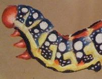 Hyles euphorbiae [Brown Hawk Moth Caterpillar]
