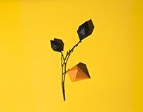 Сubic plants
