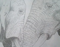 Elephants I, II, III