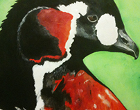 Black and Red Duck