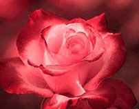 ROSE Creative Snapshots