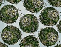 Circinate Wallpaper