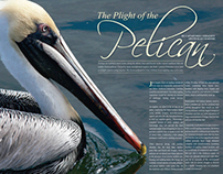 Florida Sport Fishing, Pelican feature, May/June 2007