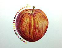 apple - still life painting