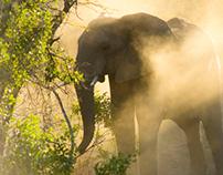 Wildlife Thanda 1
