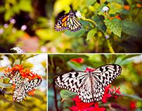 Butterfly Macro 2013