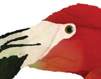 Ilustração - Flamingo