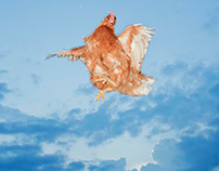 flying chickens project