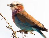Birds 1 / Oiseaux 1