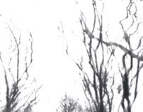 summer/winter (pinhole)