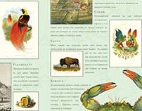 Beaux Arts Brochures