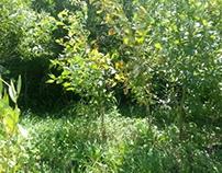 Концепция парка-променада в Стрельне