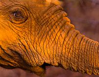 Wildlife Thanda 2