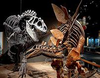 Denver Museum of Nature & Science Radio Campaign