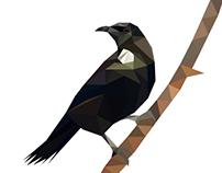 New Zealand native bird illustrations